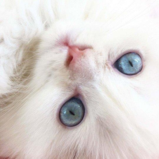 Chifumi-yeux